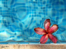 On the Pool by mayoran