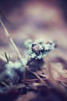Jewels on forest floor by cacaoshi