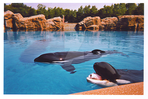 silly killer whale marineland by Spinosaur123