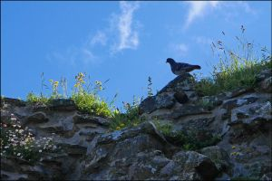 Top of A Castle by sags