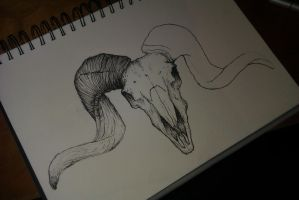 Ram Skull by TotalFuneral