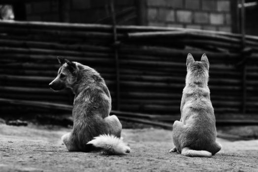 Couple Dogs by porbital