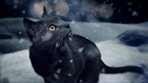 Wildpath's BURIED MOON music video still - the Cat by pippa-hynelin