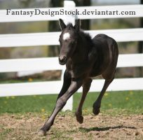 Foal-Carl 17 by FantasyDesignStock