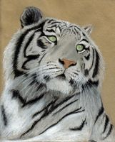 White Tiger by Benalene