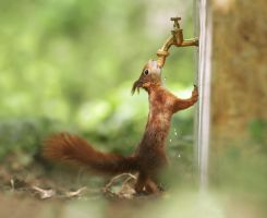 Someone forgot to turn off the water faucet.... by JulianRad