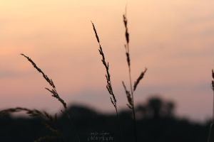 gras in the sunset by anyeah