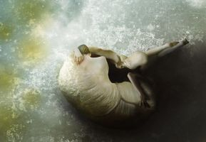 the shell... by Mihray