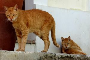 Homeless Cats by CanNearrlyFly
