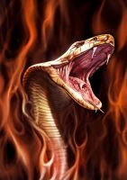 cobra on fire by jafaime