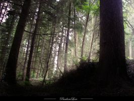 Forest 13 by AnitaJoy-Stock