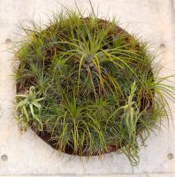 Wall plant by Voyager168