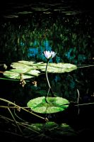 Lilly in the Dark by Mitchography