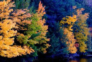 Autumn Colors 2 by GNSPhotography