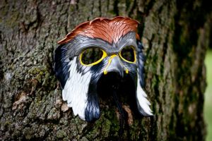 American Kestrel Leather Mask by OsborneArts
