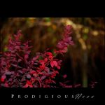 Prodigiousness 01 by GregorKerle