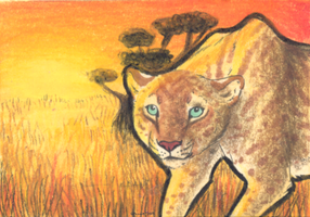 Stalking at Sunset - ACEO Trade by PoonieFox