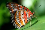 Butterfly Photo 2 by blookz