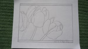 Queen of the Night Tulips Lineart by somechick73
