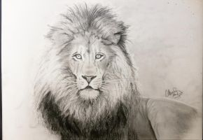 my first lion by tonez2