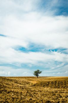 A Sky full of Clouds by Tiris76