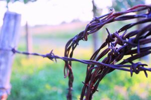 Coil of barbed wire by WhyteHawke