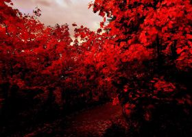 Red autumn by KariLiimatainen