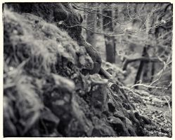 Trees and Stones 09 by HorstSchmier