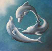 dolphins by chrissyp
