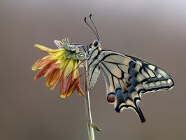 Goodbye, Summer... by dralik