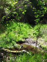 creek in the woods by brandrificus-stock