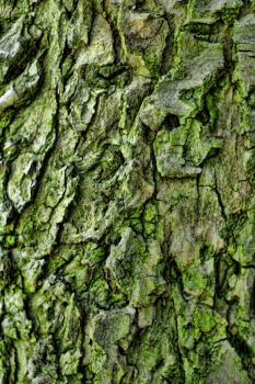 Bark Texture 3 by 0-Symmetry-0