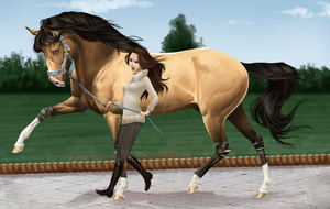 Vet Check Challenge of Ares by BH-Stables