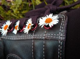 daisies from Shoestringshole by FlyingGoblin