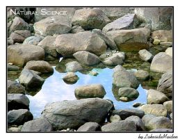 Natural Science: Tide Pools by LakesideMaiden