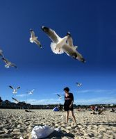 seagulls attack by selfhaircuts