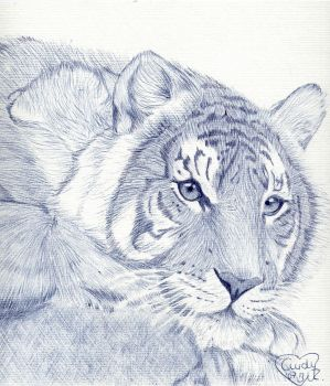 Tiger staring in Ballpoint pen by Cindy-R