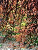 Acer palmatum Twigs On Fire by aegiandyad