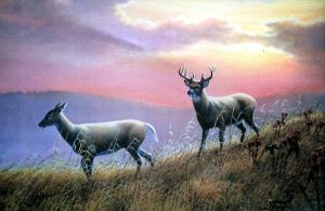 deer at sunset by traits