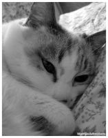 My Black and White Cat by AjeZ
