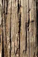 Wood 1 Vertical by JucsticeStock
