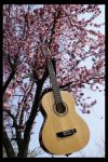 Spring is music by TroughTheGlass