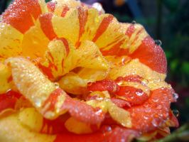 Red, Yellow, Wet by deoris
