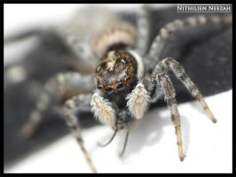Spider 2 by nithilien