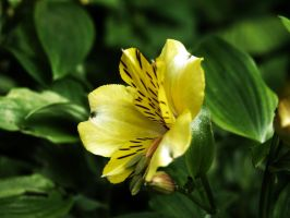 Yellow Flower Macro by Thaylien