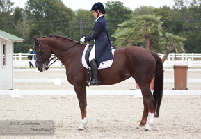 Dressage Cup_14 by CalyHoney