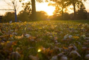 fall sunset by ksham25