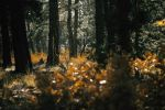 Into the Autumn Forest by MStout