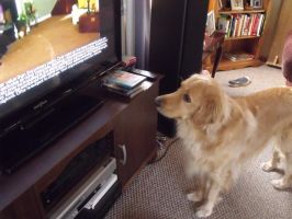 Casey Loves TV by qrayson