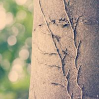 Day 297 - Whispering Trees by SafetyInNumbness